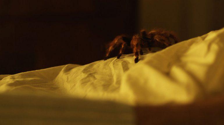 La Migala | Featured Short Film