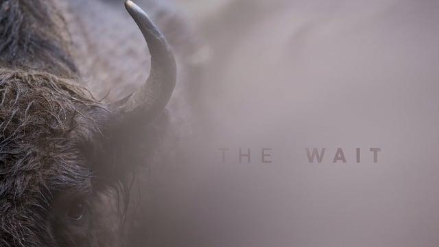 The Wait || Daily Short Picks