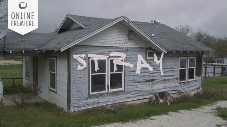 Stray || Daily Short Picks