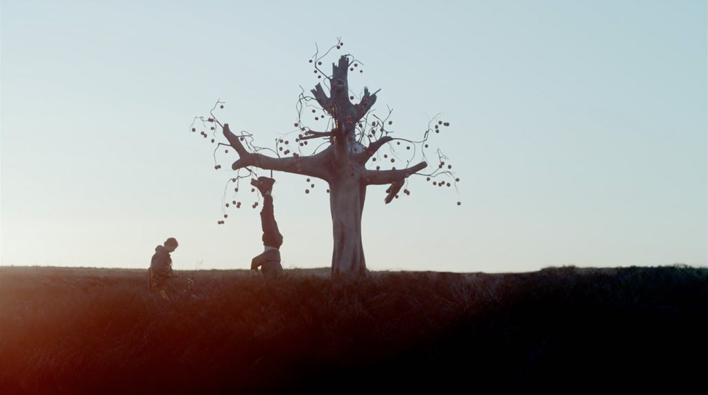 The Most Inspirational Cinematography - The Tree