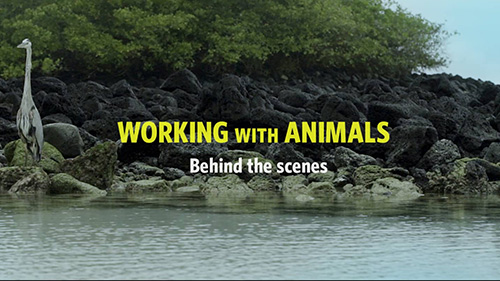 Daily Short Picks | Working With Animals