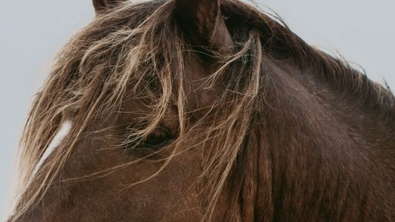 Stronghold of Resistance: Sable Island & Her Legendary Horses || Daily Short Picks