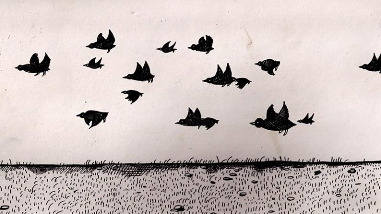 There's Too Many of These Crows // Daily Short Picks